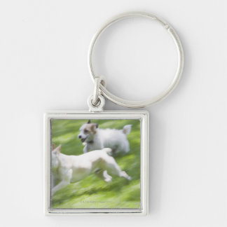 Dogs running in lawn Silver-Colored square key ring