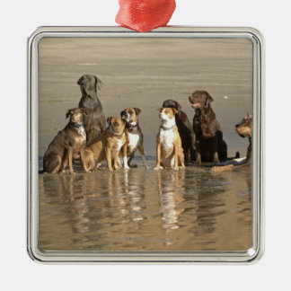 Dogs sitting on beach christmas ornament