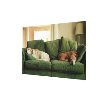 Dogs sleeping on sofa canvas print