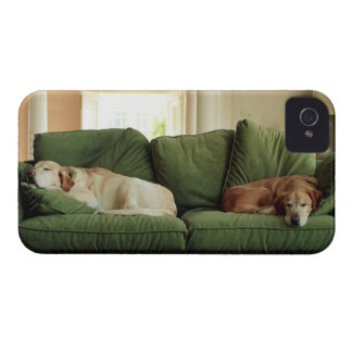 Dogs sleeping on sofa iPhone 4 cover