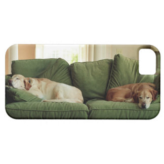 Dogs sleeping on sofa iPhone 5 cases