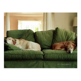 Dogs sleeping on sofa postcard