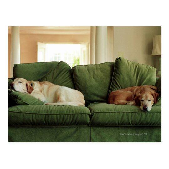 Dogs sleeping on sofa postcard