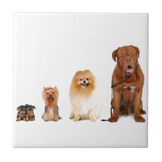 dogs small square tile