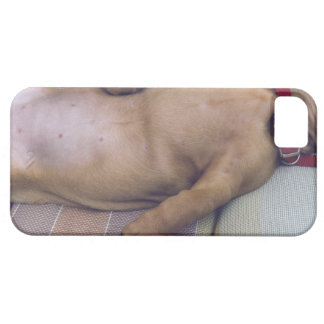 Dog's Stomach Barely There iPhone 5 Case
