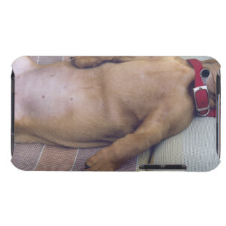 Dog's Stomach Barely There iPod Covers