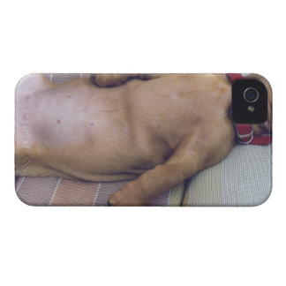 Dog's Stomach iPhone 4 Case