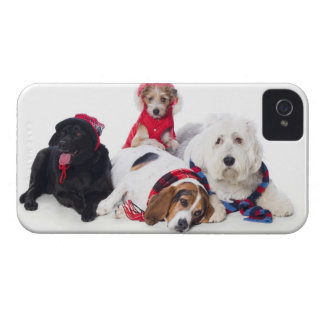 Dogs wearing winter accessories iPhone 4 covers