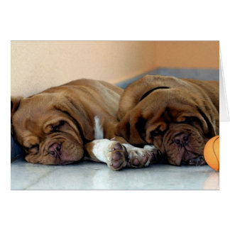 Dogue De Bordeaux Dog Blank Greeting Card