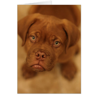dogue de bordeaux puppy mastiff card
