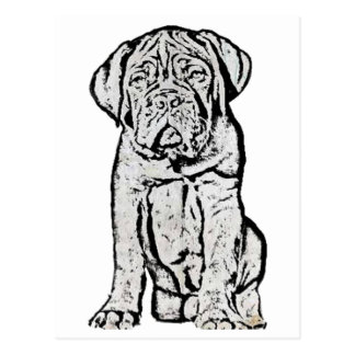Dogue de Bordeaux puppy postcard