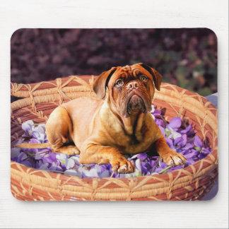 Dogue de Bordeaux Sitting on Basket full of Petals Mouse Pad