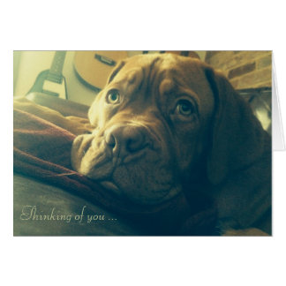 Dogue de Bordeaux Thinking of you Card
