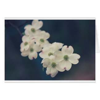 Dogwood Blossoms Card