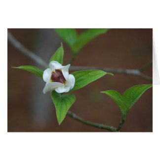Dogwood Bud Card