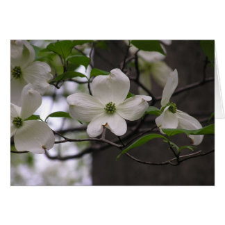 Dogwood (Cornus florida) card
