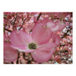 DOGWOOD Flowers Nature Art Prints Posters