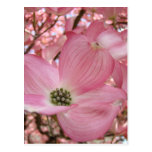DOGWOOD FLOWERS Pink 1 Cards Art Gifts Mugs