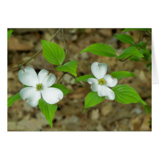 Dogwood Note II Card