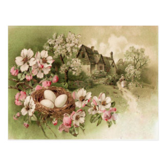 Dogwood Tree Bird Nest Egg Cottage Postcard