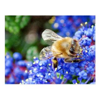 Dohr Street Bee Postcard