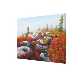 Dolly Sods Wilderness Fall Scenic With Fog Canvas Print
