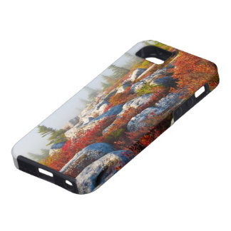 Dolly Sods Wilderness Fall Scenic With Fog Case For The iPhone 5