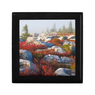 Dolly Sods Wilderness Fall Scenic With Fog Gift Box