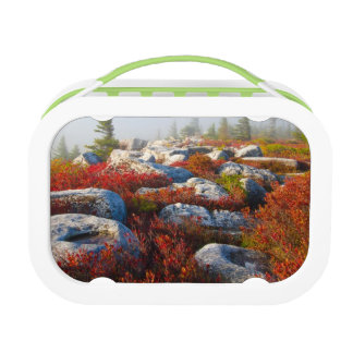 Dolly Sods Wilderness Fall Scenic With Fog Lunch Box