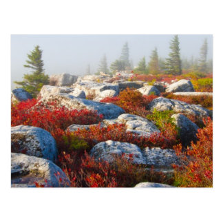 Dolly Sods Wilderness Fall Scenic With Fog Postcard
