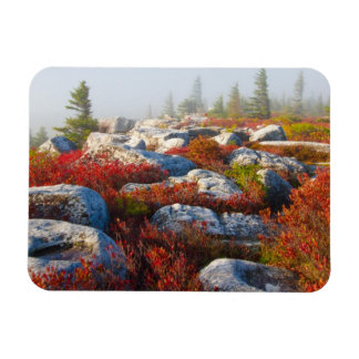 Dolly Sods Wilderness Fall Scenic With Fog Rectangular Photo Magnet