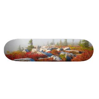 Dolly Sods Wilderness Fall Scenic With Fog Skate Decks