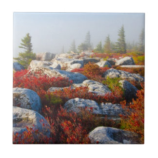 Dolly Sods Wilderness Fall Scenic With Fog Small Square Tile