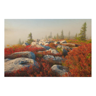 Dolly Sods Wilderness Fall Scenic With Fog Wood Canvas