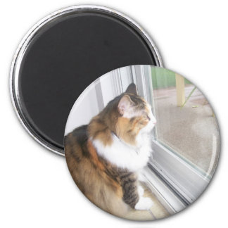 Dolly the Cat Looking out Window Magnet