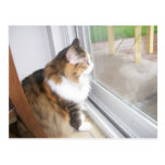 Dolly the Cat Looking out Window Postcard