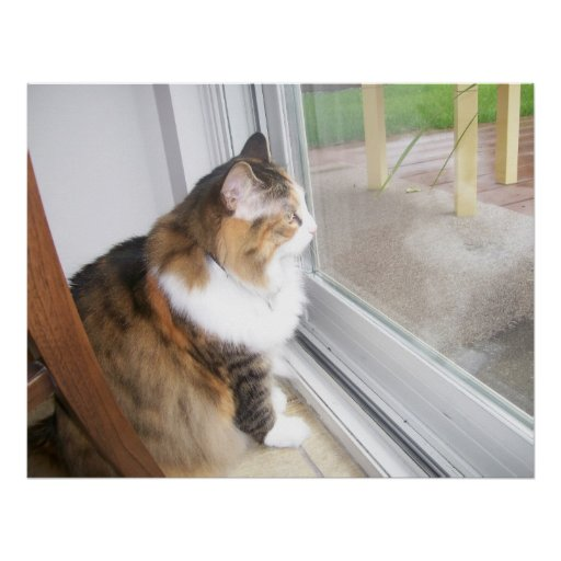 Dolly the Cat Looking out Window Poster