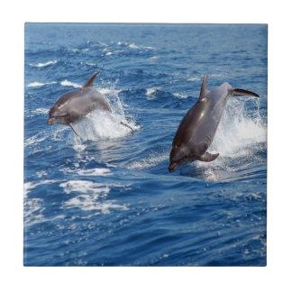 Dolphin Adventure Small Square Tile