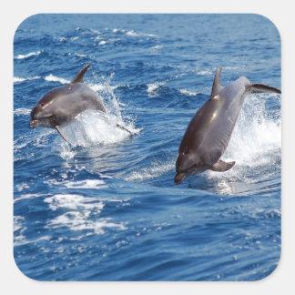 Dolphin Adventure Square Sticker