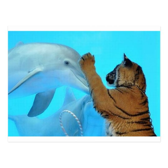 Dolphin and Tiger meet Postcard