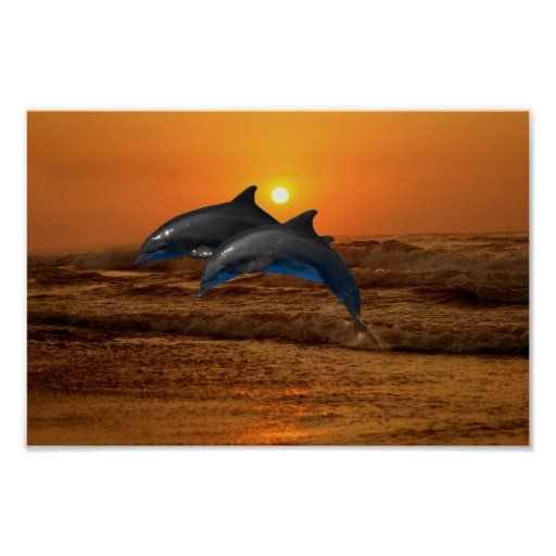 Dolphin at sunset posters