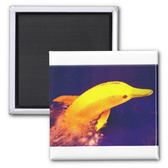 Dolphin Banana Magnet