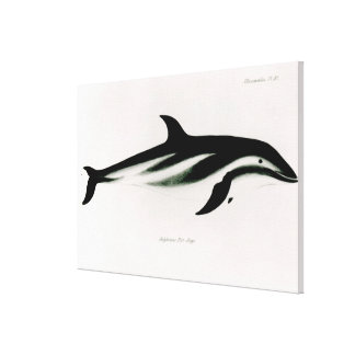 Dolphin Stretched Canvas Print