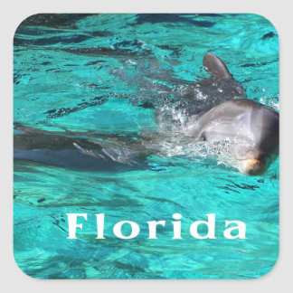 dolphin coming out of teal clear water florida.jpg sticker