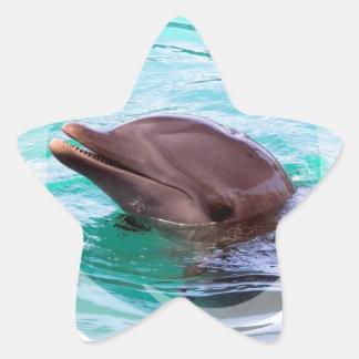 Dolphin Design Stickers