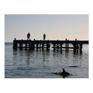 Dolphin Feeding at Monkey Mia Western Australia Postcard