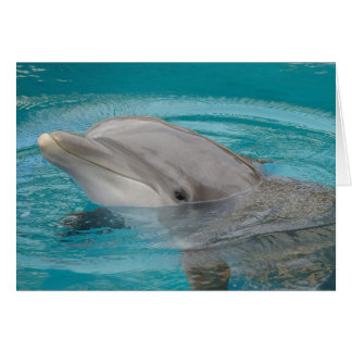 Dolphin Friend Hello Card
