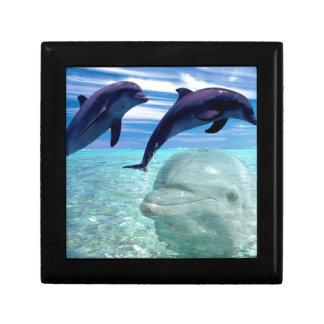 Dolphin Gift Box