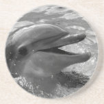 Dolphin head in water mouth open Black and White