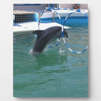 Dolphin Hoop Display Plaques